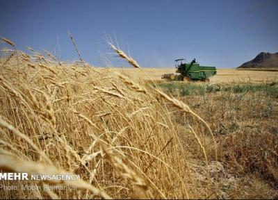 رشد 80 درصدی صادرات گندم بزرگترین صادرکننده غلات دنیا