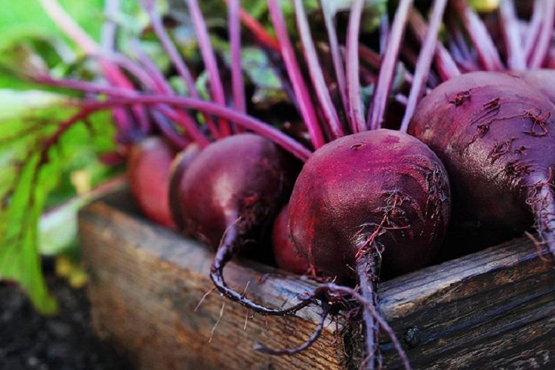 چغندر گیاهی موثر در کاهش فشار خون