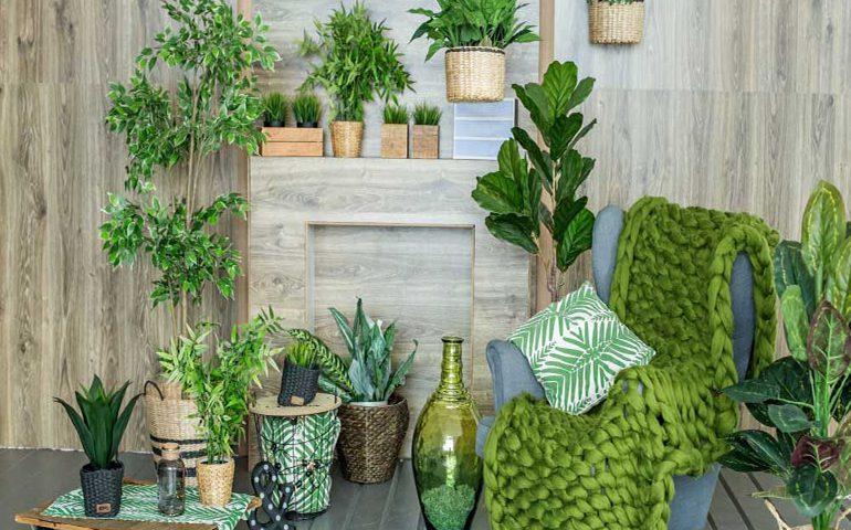 گیاهان سازگار با نور کم در منزل