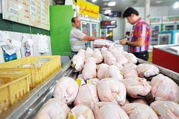 50 درصد مرغ ها در همدان روی دست مرغداران ماند